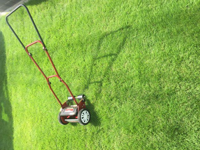 なぜゴルフ場やサッカー場の芝生は冬でも緑なのか