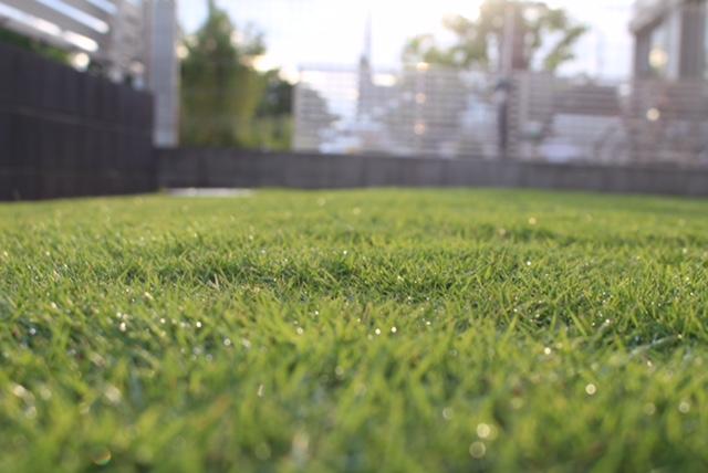 一度張った芝生を剥がして植え替えてみた 芝生の補植