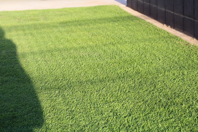 芝生の種まき 台風で適正温度を下回る今年の秋