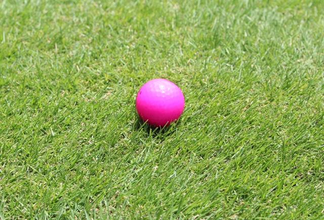 初めての芝生は大変なのか?芝生管理はそんなに難しくありませんでした。
