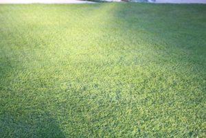 一年中芝生を緑にする3つの方法