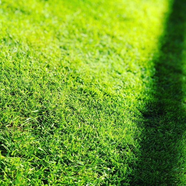 冬に芝生が茶色くなってくるのが嫌な方へ 3つの対策