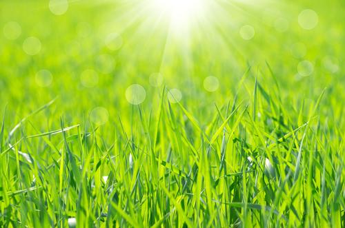 姫高麗芝を粘土質の土に。床土作りと発芽までの水やり