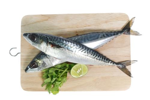 鮮魚革命 今注目の津本式究極の血抜きとは